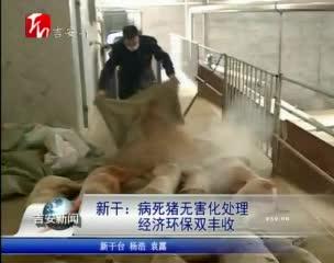 新干:病死猪无害化处理 经济环保双丰收