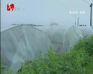 """泰和县丰垅村:""""输血""""发展产业脱贫致富"""