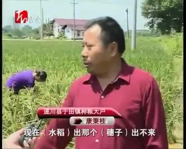 遂川:农技人员走进田间助灾后农业恢复