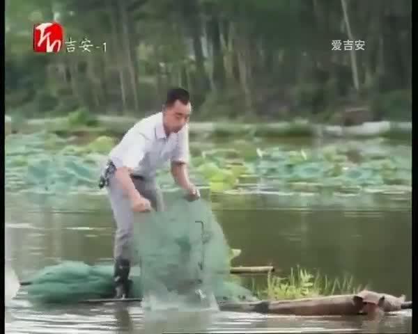 峡江:小龙虾进莲田 一地两用效益高