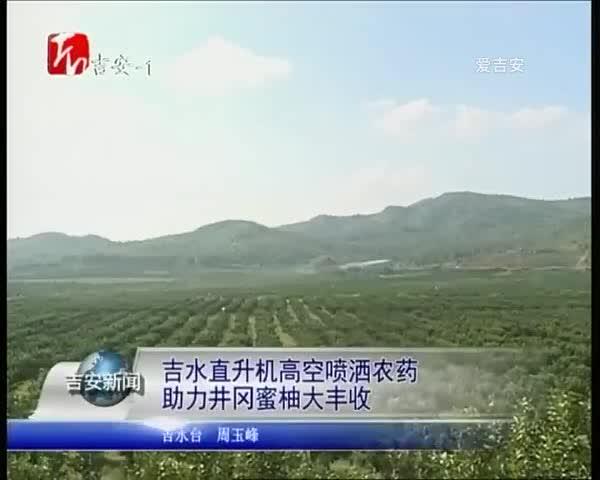 直升机高空喷洒农药 助力井冈蜜柚大丰收