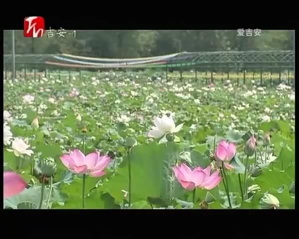 遂川良岗:做好水生态 美了乡村富了民