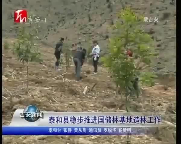 泰和县稳步推进国储林基地造林工作