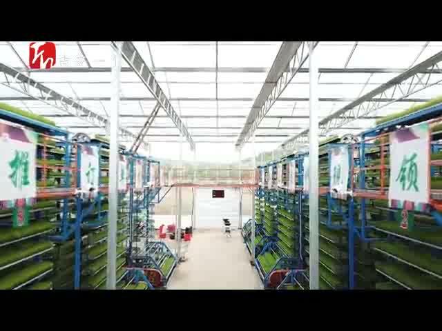 吉水:智能育秧+機械插秧 打造智慧農業新模式
