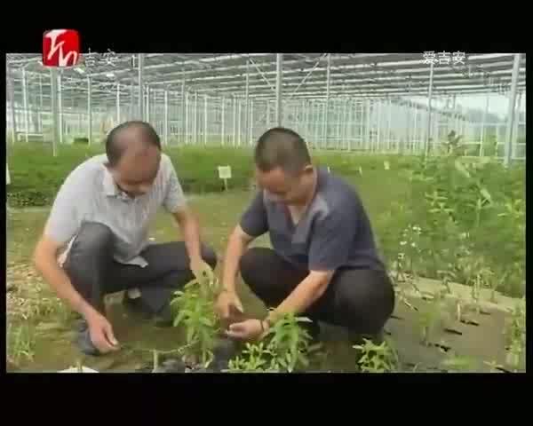 青原区:洪水渐退 农业部门及时做好救灾复产