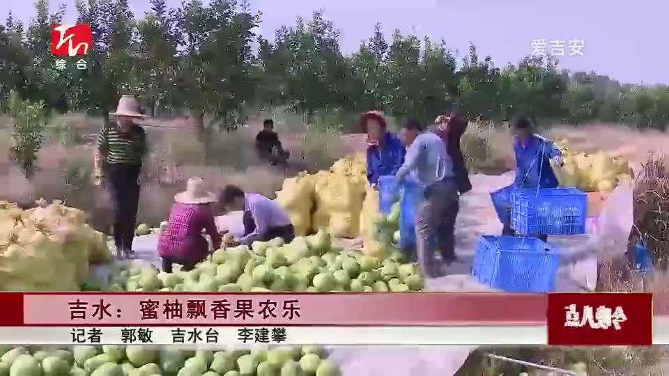 吉水:蜜柚飘香果农乐
